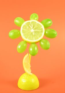 Free Fruits Flower Stock Image - 3055041