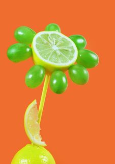 Free Fruits Flower Royalty Free Stock Photos - 3055058
