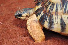 Free Turtle Royalty Free Stock Image - 3056446