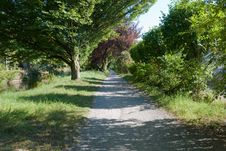 Free Footpath In The Park. Royalty Free Stock Photo - 3058195