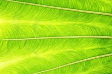 Free Background Leaf Stock Image - 3059221