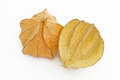 Free Physalis Fruit Stock Photos - 30501903