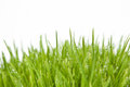 Free Fresh Grass With Dew Drops Royalty Free Stock Images - 30503089