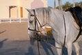 Free White Horse Stock Image - 30504561