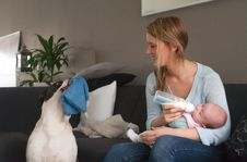 Free Feeding My Baby And The Dog Wants To Play Stock Image - 30502821