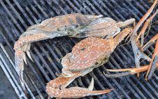 Free Seafood Stock Image - 30503131