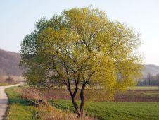 Free Round Tree Royalty Free Stock Image - 30505176