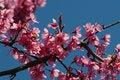 Free Tree Flowers Royalty Free Stock Image - 30517706