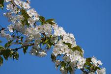 Free Flowers In Botanik Garden Royalty Free Stock Photo - 30513165