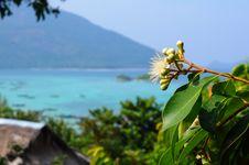 Black Plum S Flower Syzygium Royalty Free Stock Images