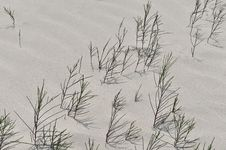 Free Casuarina On White Sand Beach Royalty Free Stock Photography - 30517047