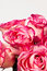 Free Roses Royalty Free Stock Image - 30519856