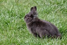 Free Cute Rabbit Stock Image - 30528561