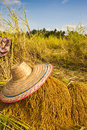 Free Yellow Jasmine Rice Stock Photos - 30534693