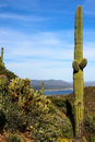 Free Cactus On Tonto National Monument Stock Photos - 30538103