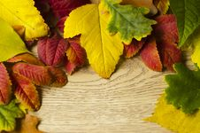 Free Autumn Leaves Royalty Free Stock Photos - 30533778