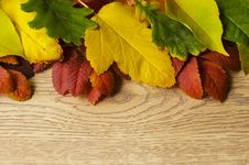 Free Autumn Leaves Stock Photography - 30533862