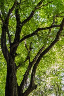 A Big Tree Royalty Free Stock Images
