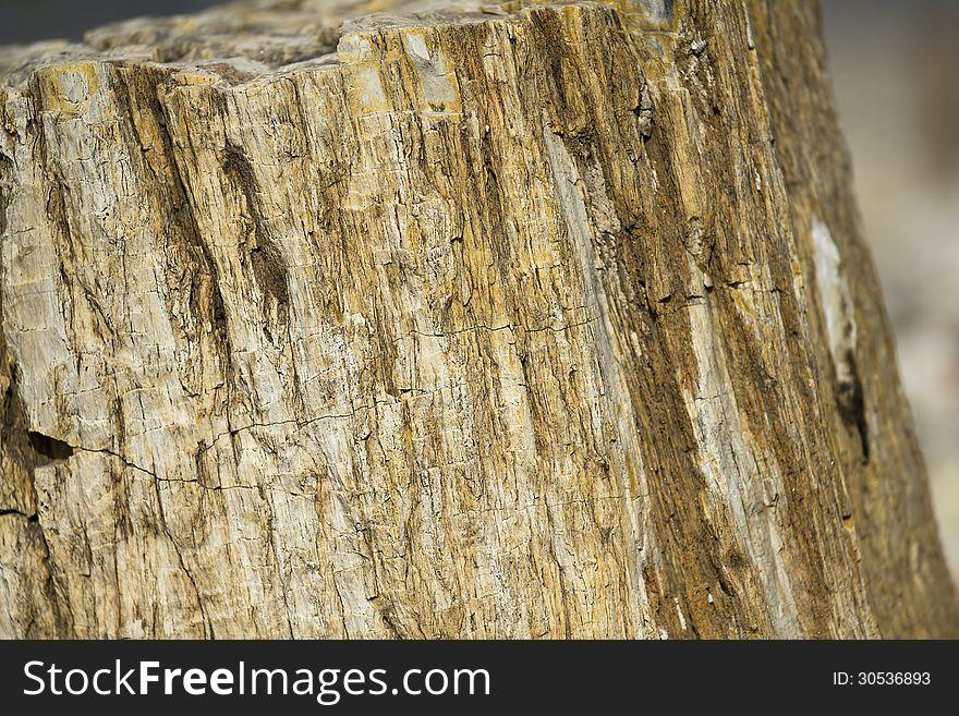 Closeup Shot of Petrified Wood