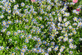 Free Daisy Meadow Royalty Free Stock Images - 30543649