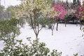 Free Spring Snow Stock Photos - 30545053