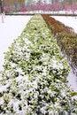 Free Spring Snow Stock Photos - 30545083