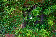 Free Abandoned Windows Stock Photos - 30541763