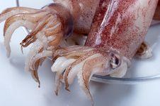 Free Squid Stock Photography - 30543972