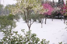 Free Spring Snow Stock Photos - 30545053