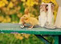 Free Yellow Ducklings Royalty Free Stock Photography - 30554017