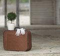 Free Still Life With Retro Suitcase And Myrtle Tree Royalty Free Stock Image - 30554696