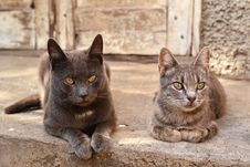 Free Two Cats Near An Abandoned House Royalty Free Stock Image - 30550856