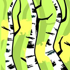 Free Abstract Birches Royalty Free Stock Photography - 30551427