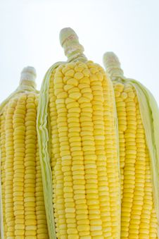 Free Corn Royalty Free Stock Photography - 30552287