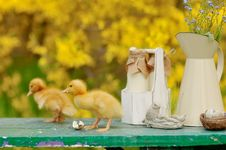 Yellow Ducklings Stock Images