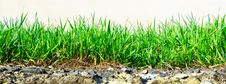 Free Grass Growing Out Of Stone Stock Photo - 30557880