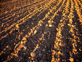Free Plow Land Ready For Cultivation Royalty Free Stock Photos - 30562398
