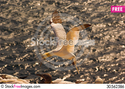 Free Helgoland - German Island In The North Sea Royalty Free Stock Image - 30562586