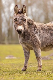 Free Donkey Stock Photo - 30569330