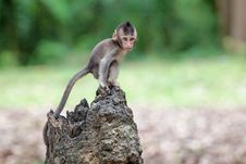 Free Monkey Stock Image - 30569371