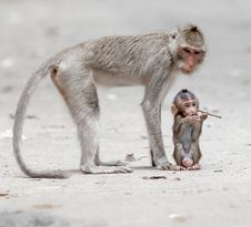 Free Monkey Stock Photos - 30569373