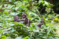 Free Monkey Stock Images - 30569374