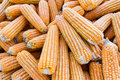 Free Yellow Dried Corn Stock Image - 30571231