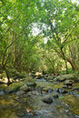 Free Stream In Forest Royalty Free Stock Images - 30577959