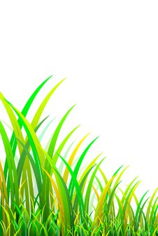 Free Grass 3D Royalty Free Stock Photography - 30571917
