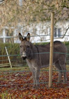Free The Donkey Royalty Free Stock Image - 30577656