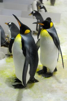 Free The Penguins Stock Photography - 30578002