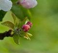 Free Spring Flowers Stock Image - 30584881