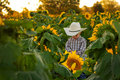 Free Young Farmer In Sunflower Field Royalty Free Stock Image - 30588616