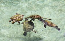 Free Sea Turtles. Stock Photography - 30583762